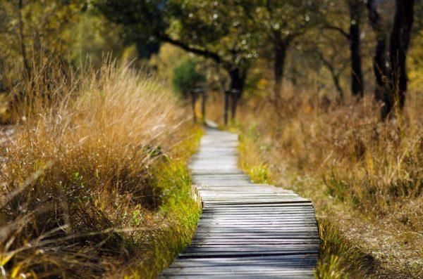 Animal Habitat Trail