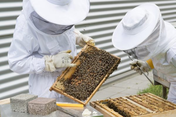 Beekeeping for Threatened Species Delegate Program