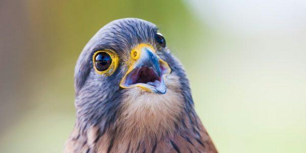 Bird WelfareCommunity Service from Youth Squad
