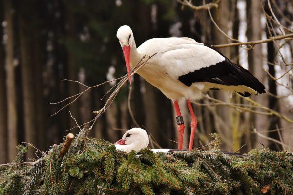 Bird Building Nest