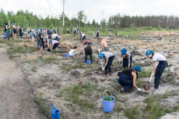 Tree Planting Lot